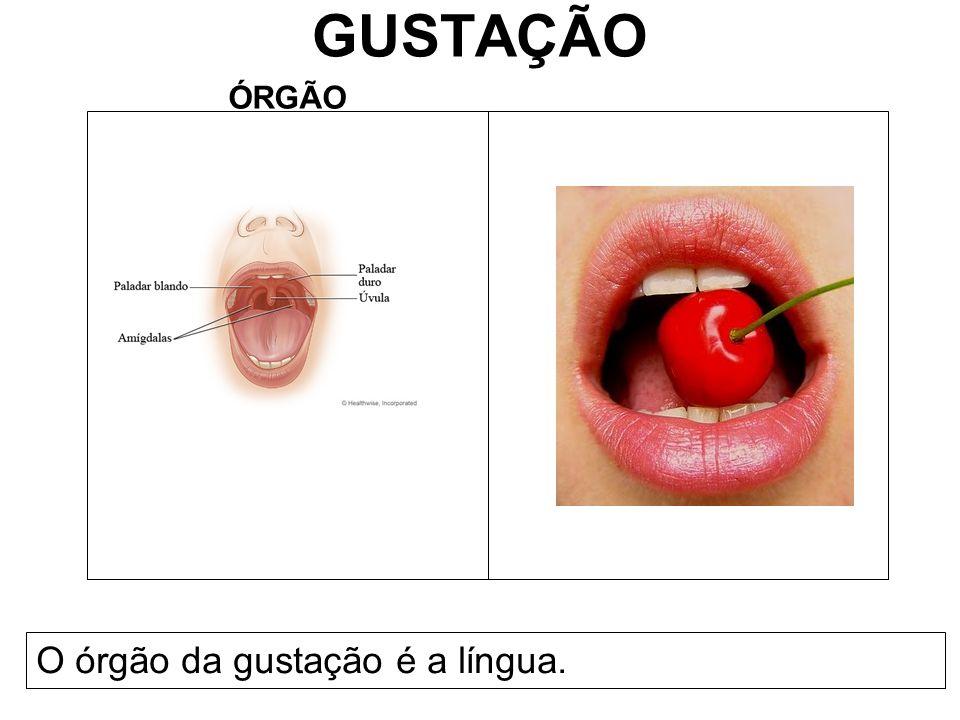 GUSTAÇÃO ÓRGÃO O órgão da gustação é a língua.