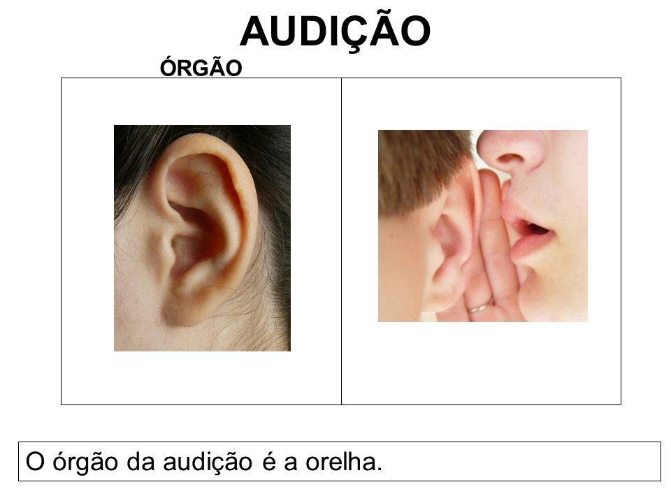 AUDIÇÃO ÓRGÃO O órgão da audição é a orelha.