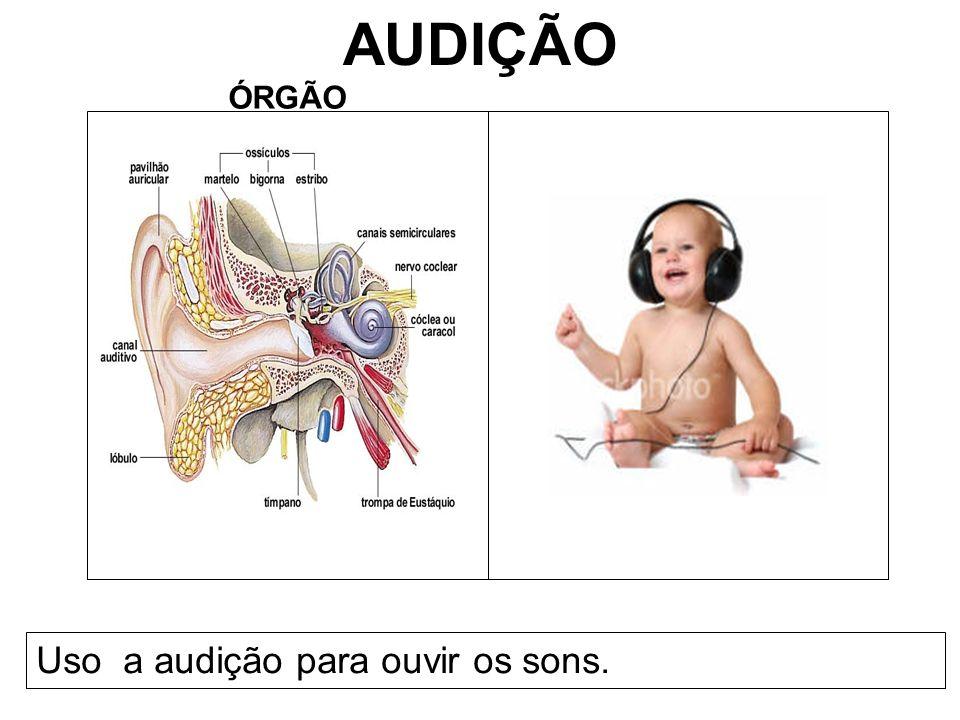 AUDIÇÃO ÓRGÃO Uso a audição para ouvir os sons.