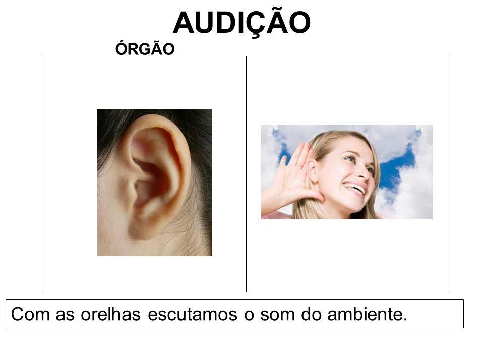 AUDIÇÃO ÓRGÃO Com as orelhas escutamos o som do ambiente.