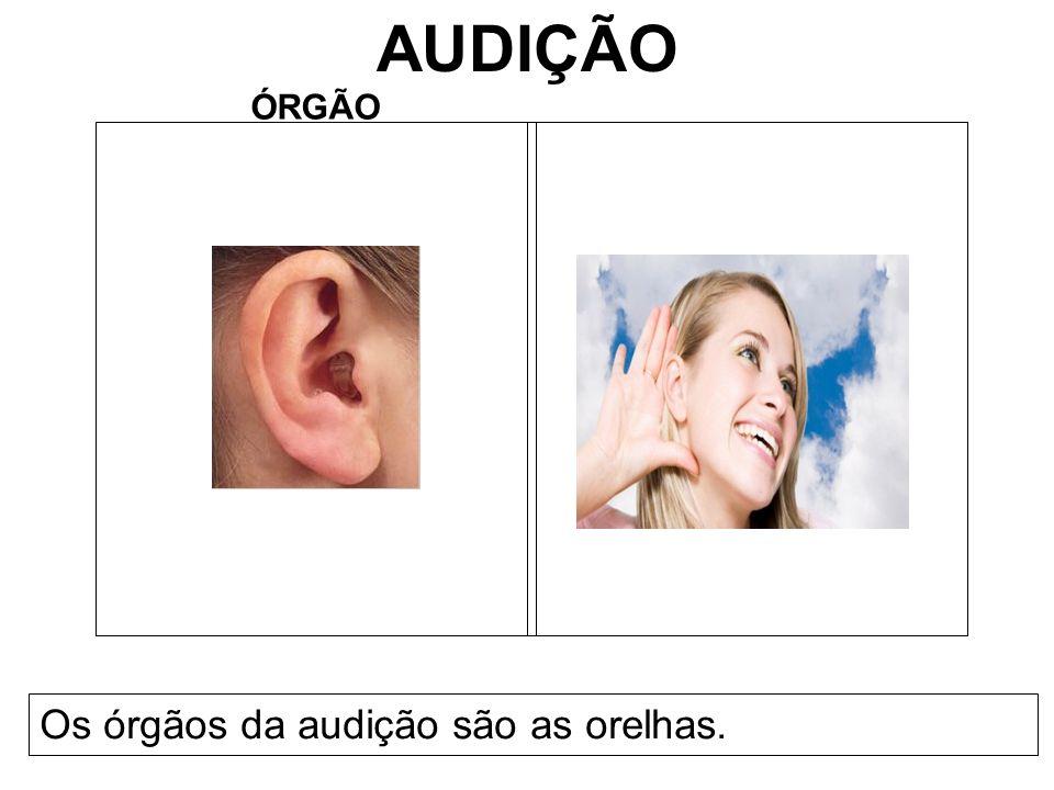 AUDIÇÃO ÓRGÃO Os órgãos da audição são as orelhas.