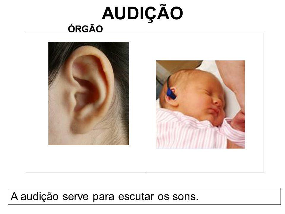 AUDIÇÃO ÓRGÃO A audição serve para escutar os sons.