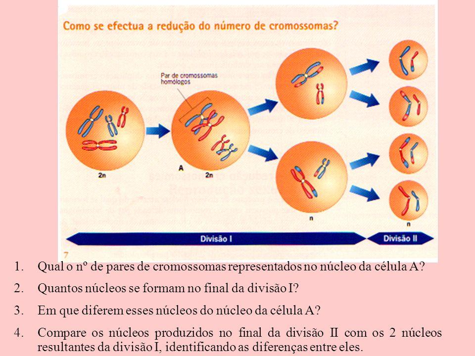 Qual o nº de pares de cromossomas representados no núcleo da célula A