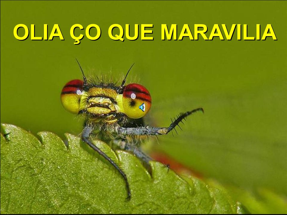 OLIA ÇO QUE MARAVILIA