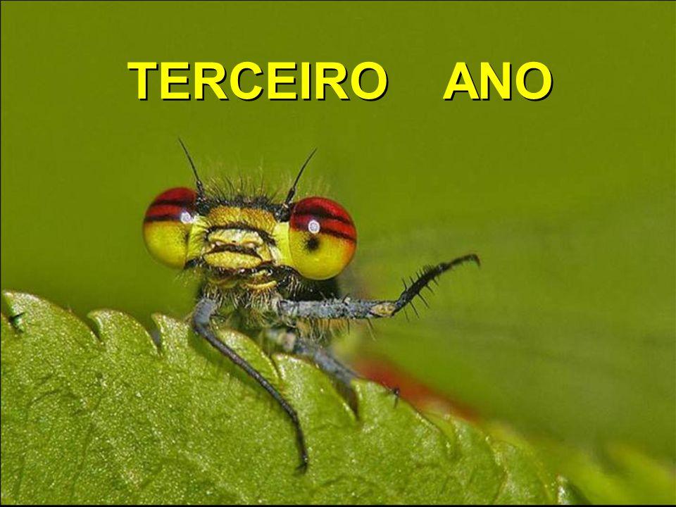 TERCEIRO ANO