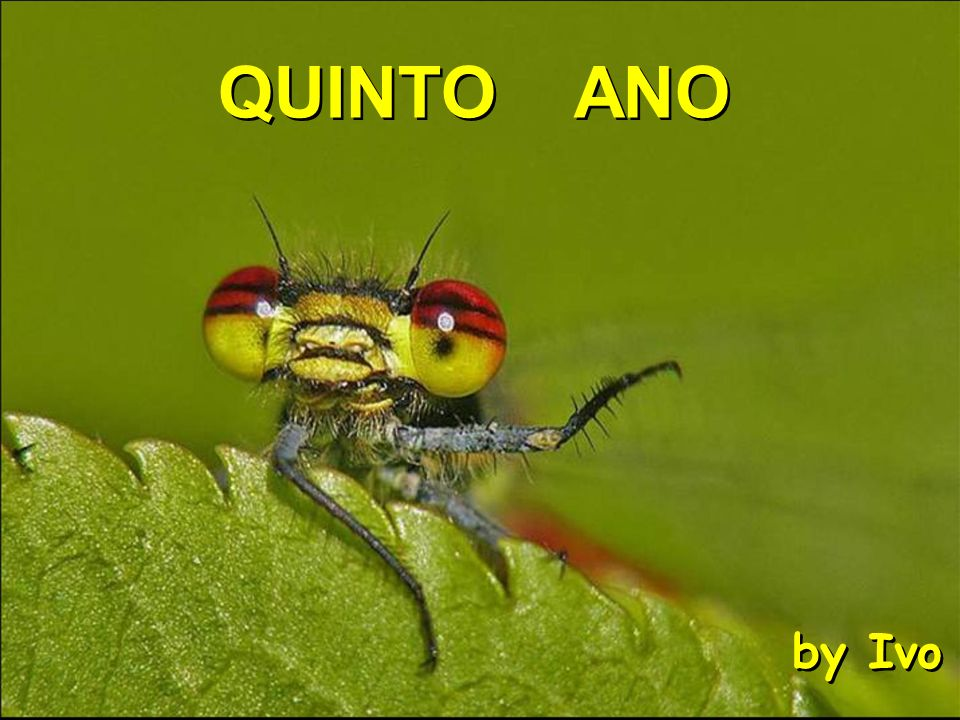 QUINTO ANO by Ivo