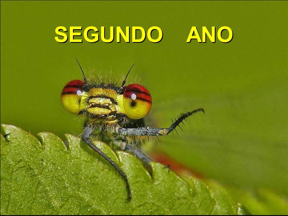 SEGUNDO ANO
