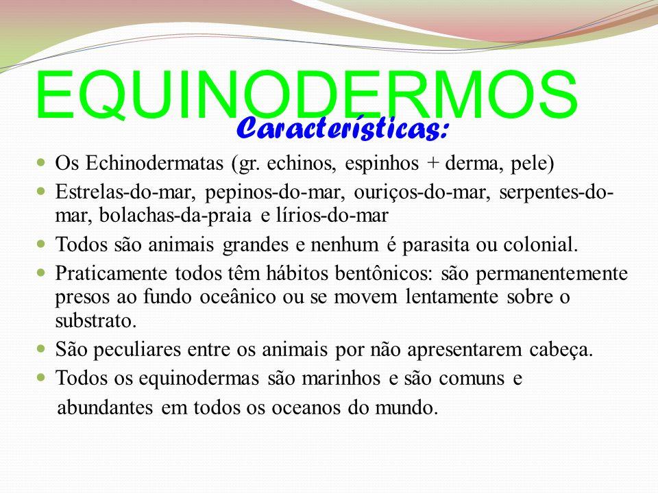 EQUINODERMOS Características: