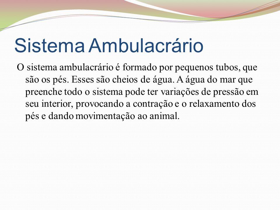 Sistema Ambulacrário