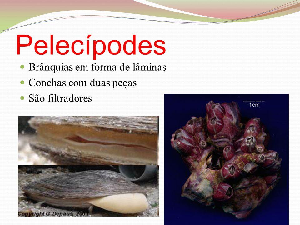 Pelecípodes Brânquias em forma de lâminas Conchas com duas peças