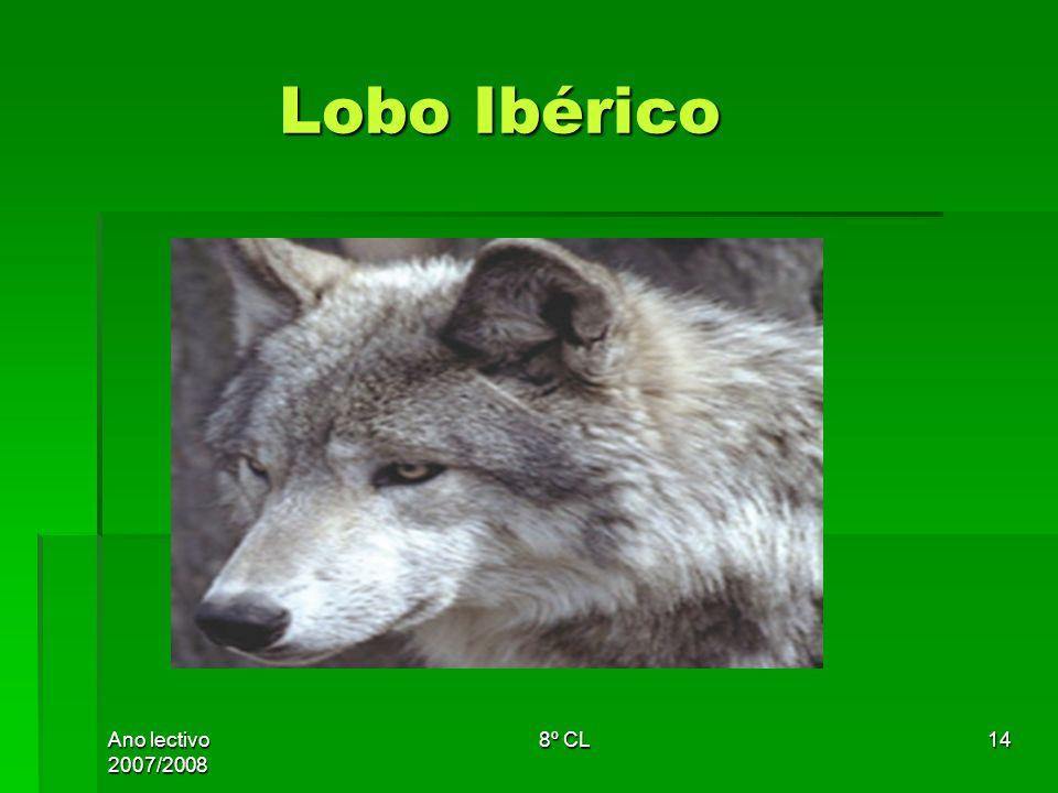 Lobo Ibérico Ano lectivo 2007/2008 8º CL