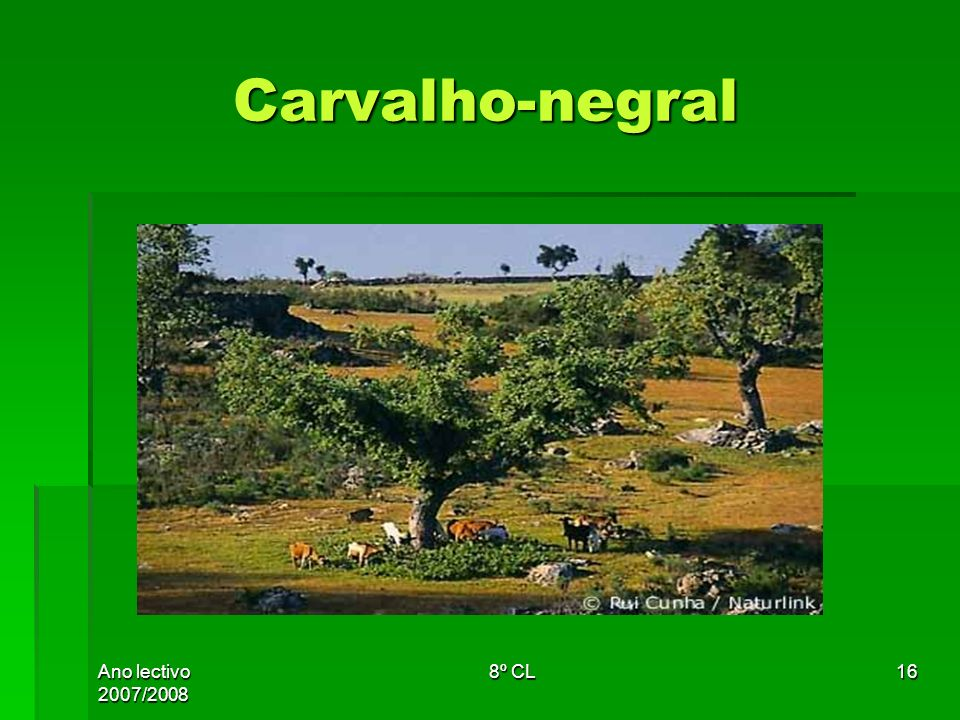 Carvalho-negral Ano lectivo 2007/2008 8º CL