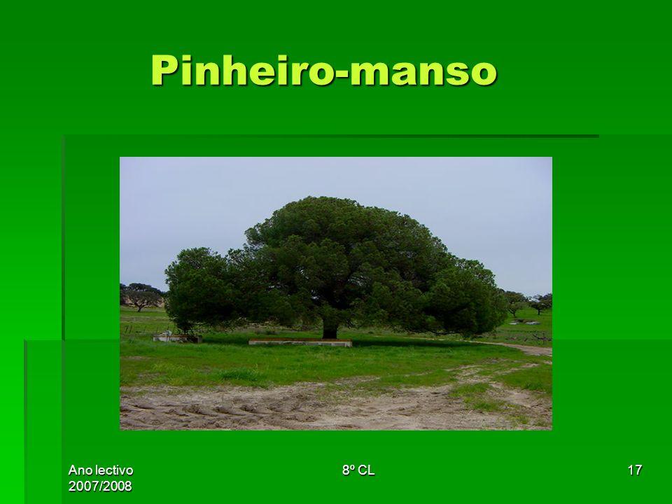 Pinheiro-manso Ano lectivo 2007/2008 8º CL