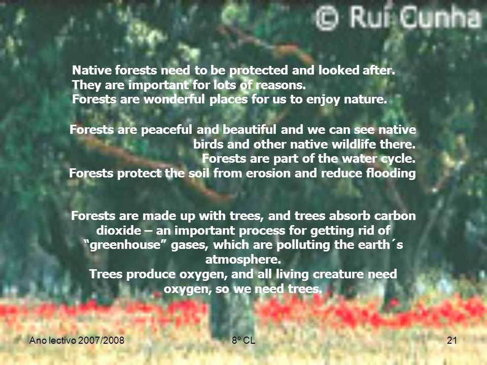 Native forests need to be protected and looked after.