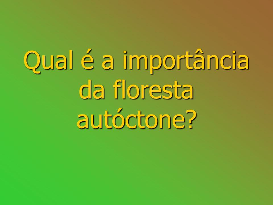 Qual é a importância da floresta autóctone