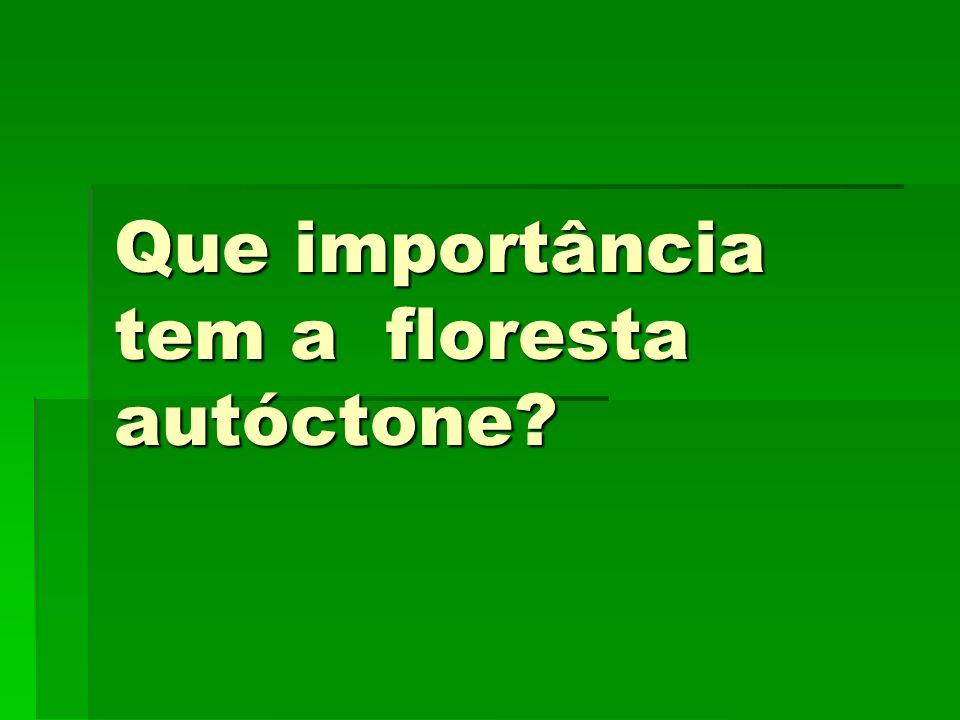 Que importância tem a floresta autóctone