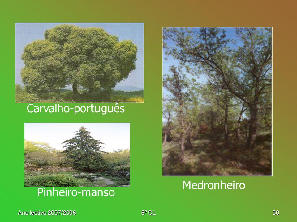Carvalho-português Medronheiro Pinheiro-manso Ano lectivo 2007/2008