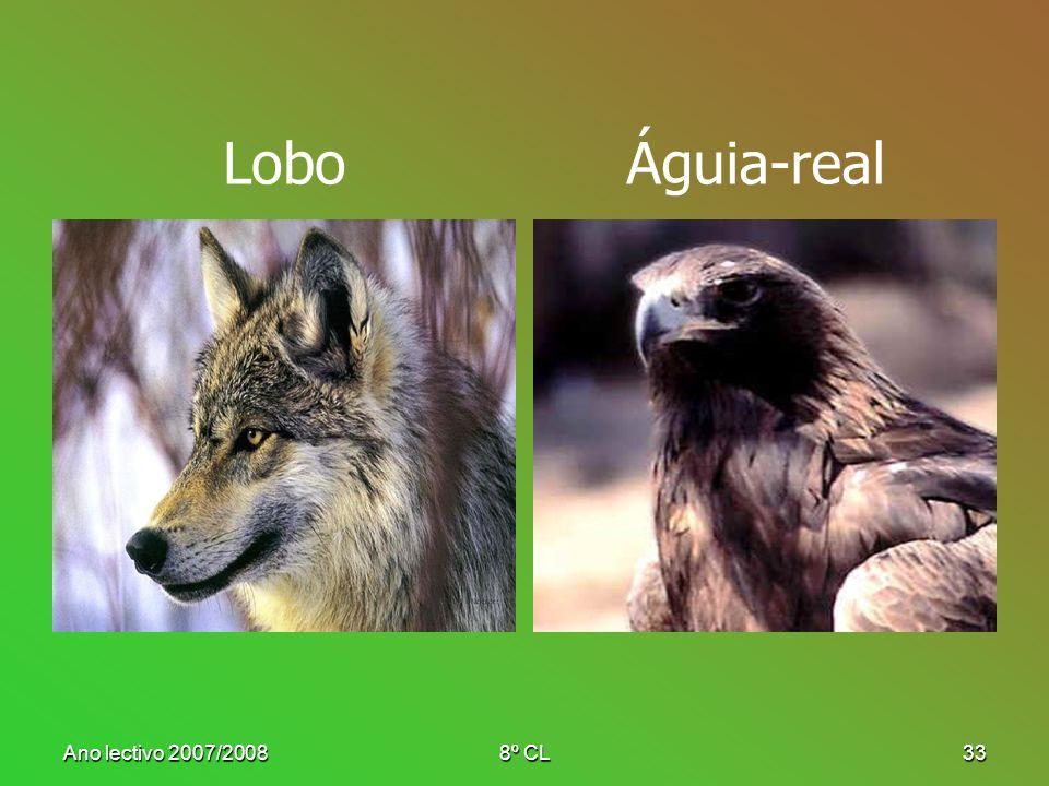 Lobo Águia-real Ano lectivo 2007/2008 8º CL