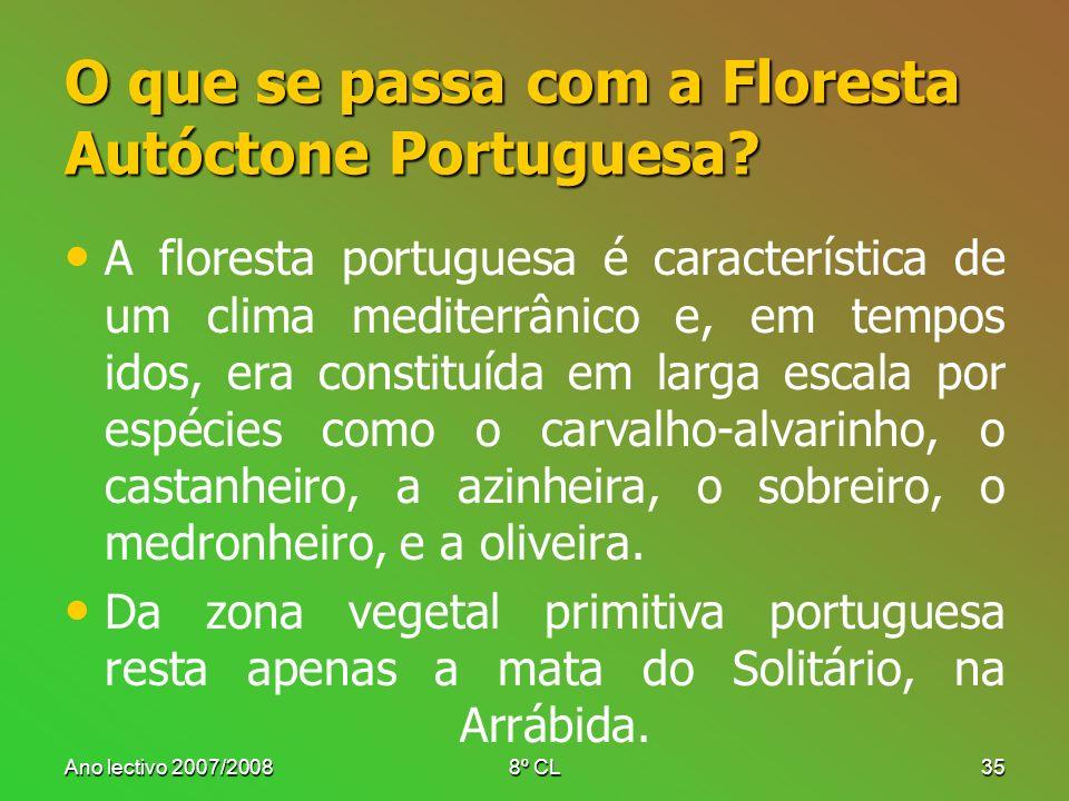 O que se passa com a Floresta Autóctone Portuguesa