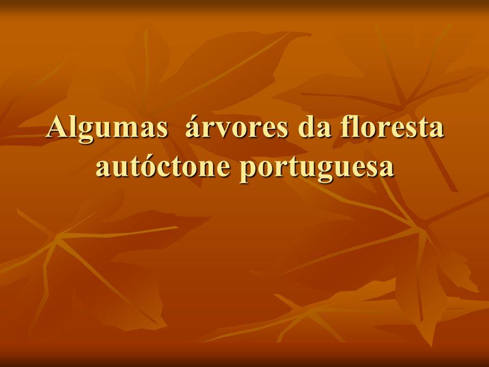 Algumas árvores da floresta autóctone portuguesa