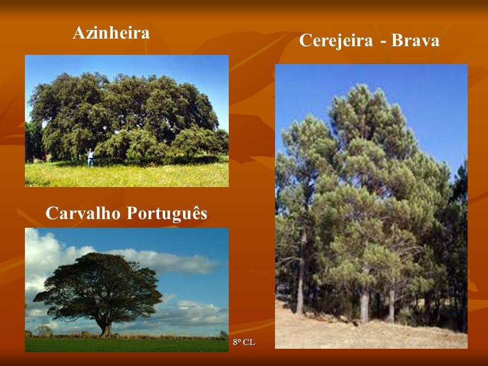 Azinheira Cerejeira - Brava Carvalho Português Ano lectivo 2007/2008