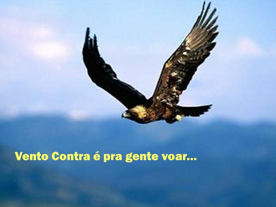 Vento Contra é pra gente voar...