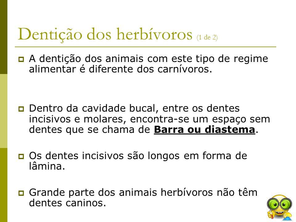 Dentição dos herbívoros (1 de 2)