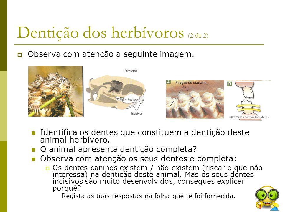 Dentição dos herbívoros (2 de 2)