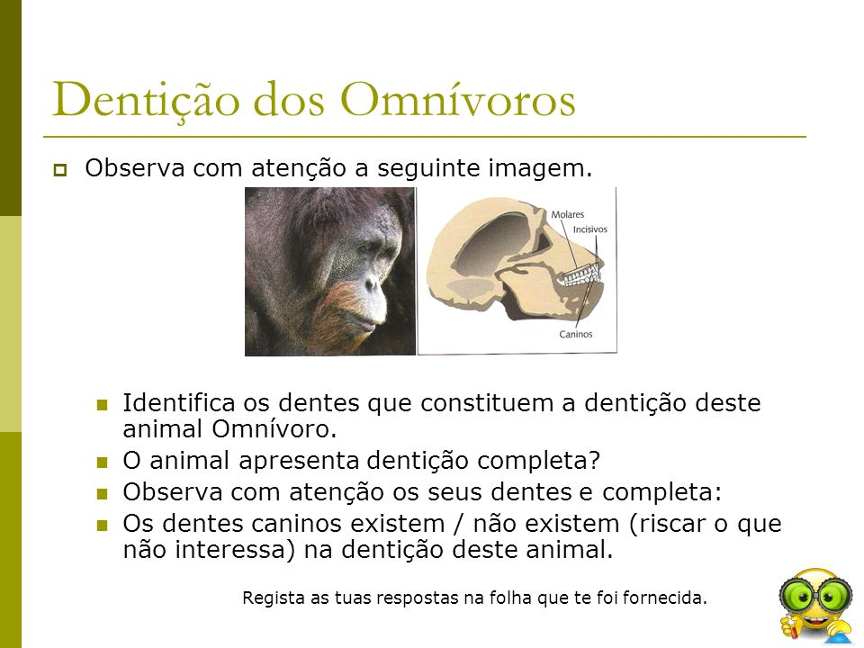 Dentição dos Omnívoros