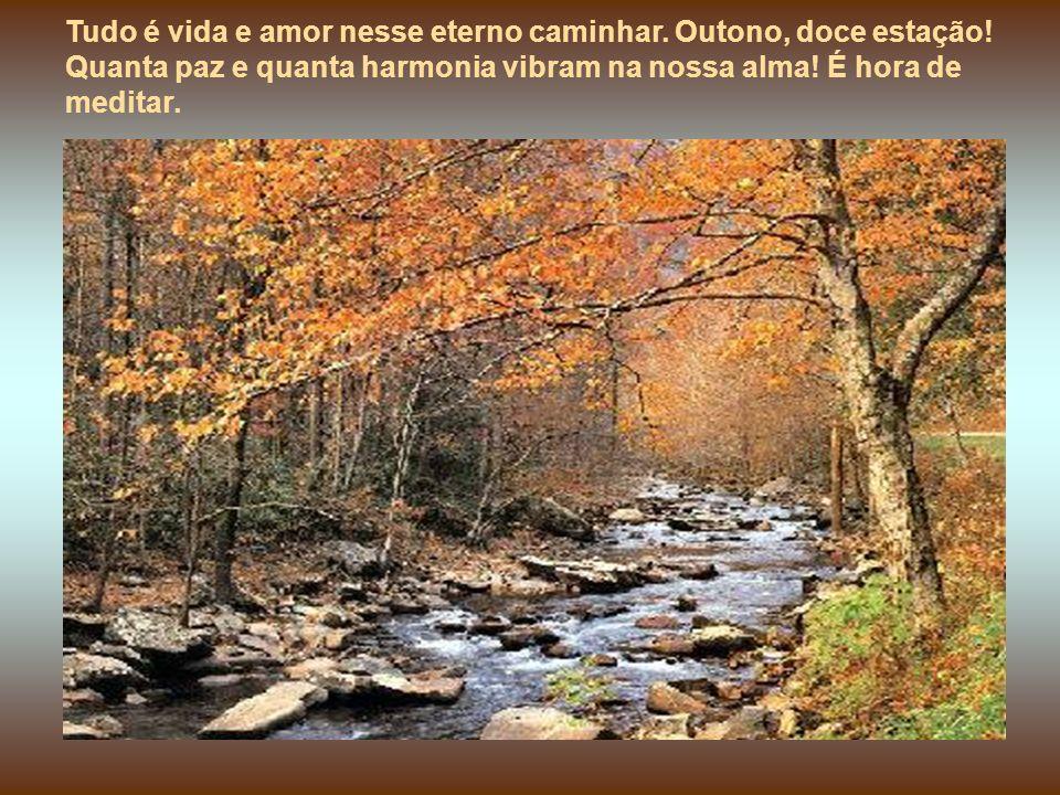 Tudo é vida e amor nesse eterno caminhar. Outono, doce estação