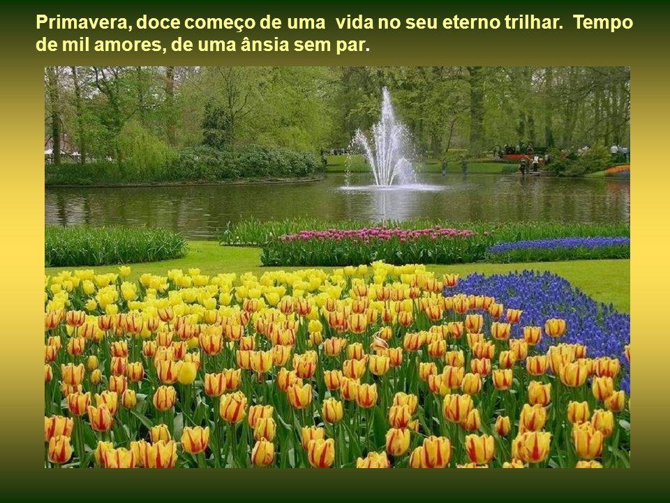 Primavera, doce começo de uma vida no seu eterno trilhar
