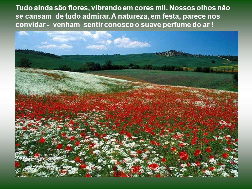 Tudo ainda são flores, vibrando em cores mil