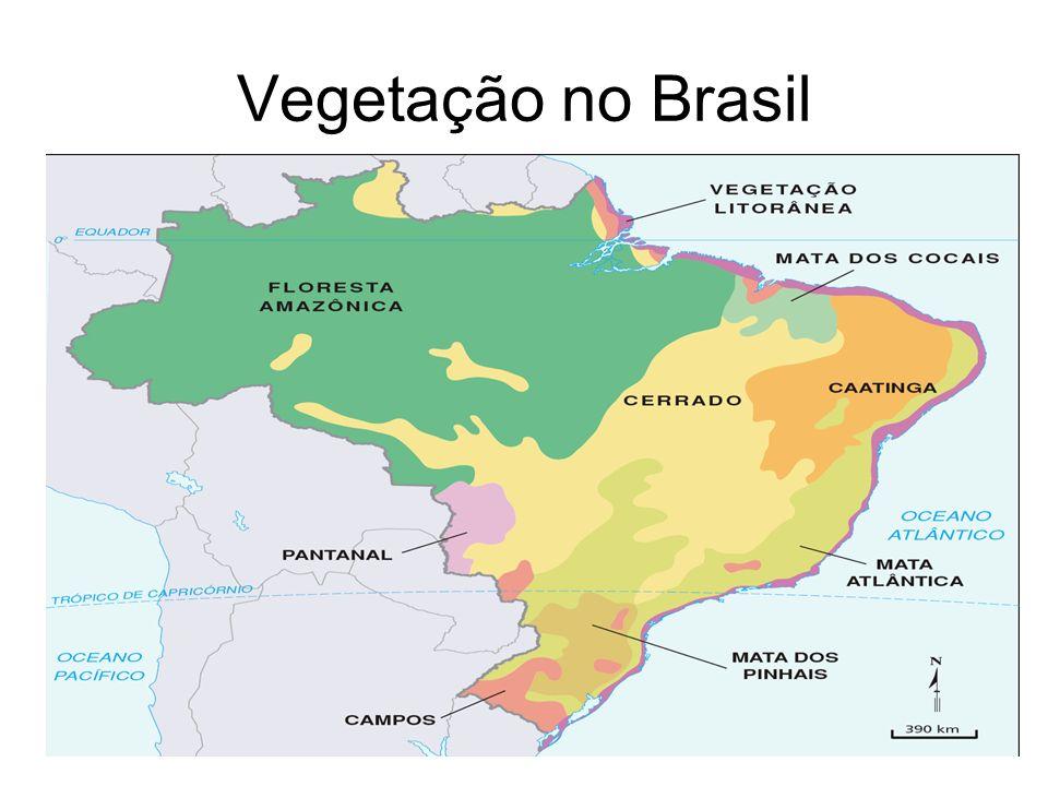 Vegetação no Brasil