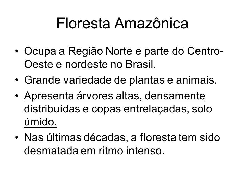 Floresta Amazônica Ocupa a Região Norte e parte do Centro-Oeste e nordeste no Brasil. Grande variedade de plantas e animais.