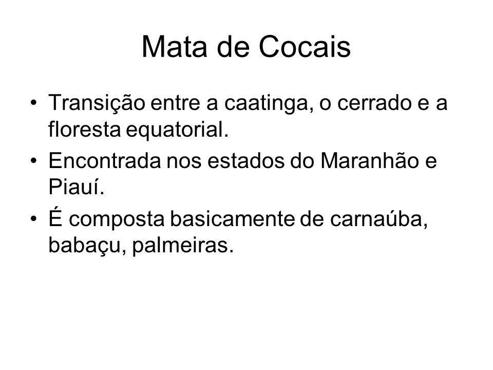 Mata de Cocais Transição entre a caatinga, o cerrado e a floresta equatorial. Encontrada nos estados do Maranhão e Piauí.