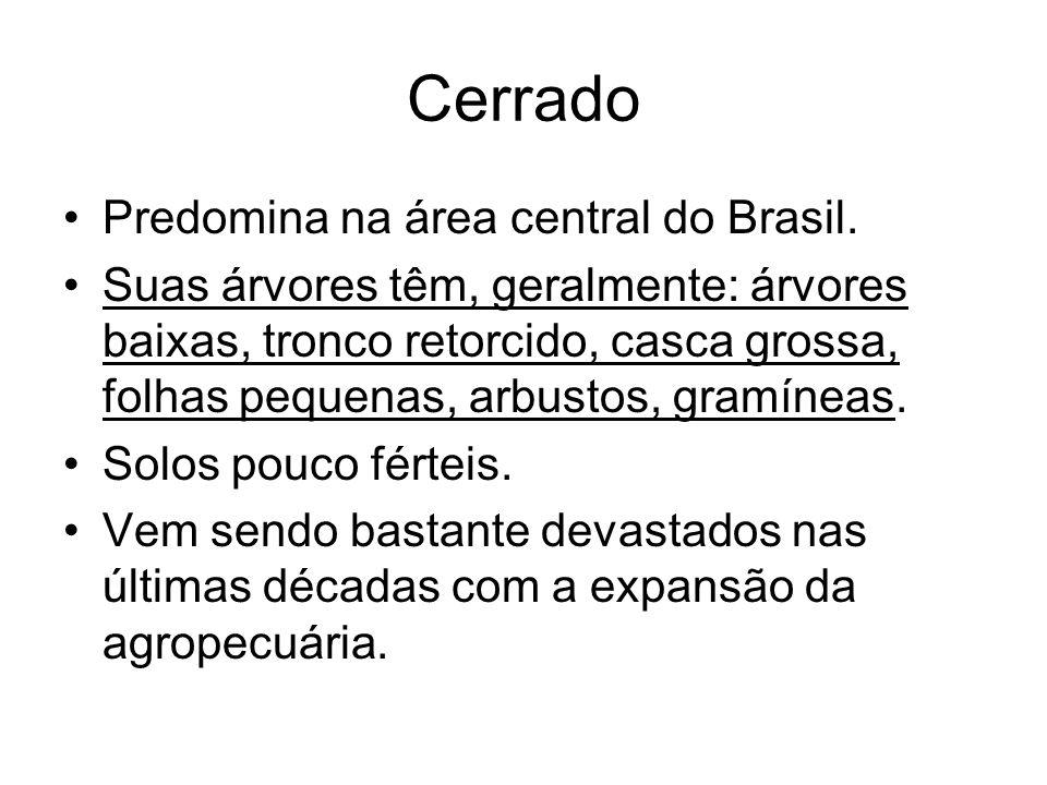 Cerrado Predomina na área central do Brasil.