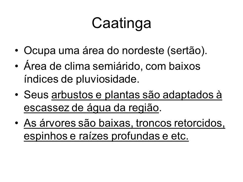 Caatinga Ocupa uma área do nordeste (sertão).