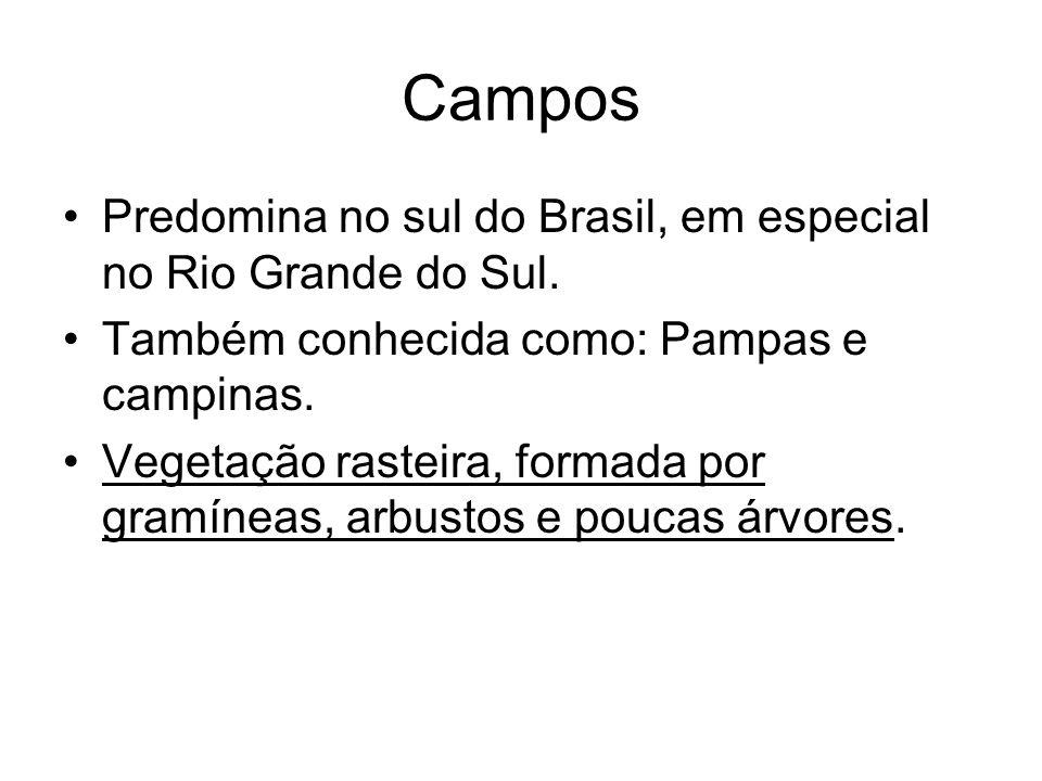 Campos Predomina no sul do Brasil, em especial no Rio Grande do Sul.