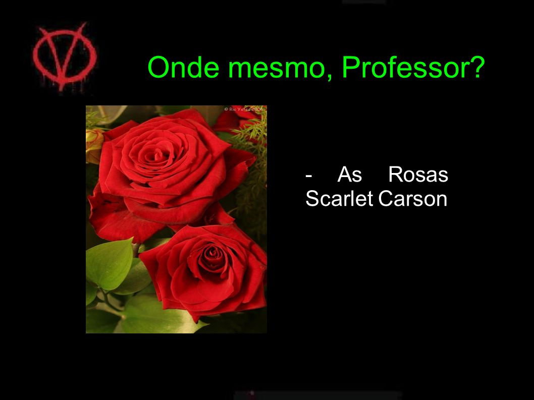 Onde mesmo, Professor - As Rosas Scarlet Carson