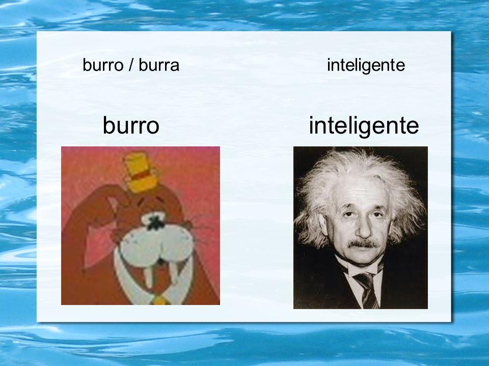 burro / burra inteligente