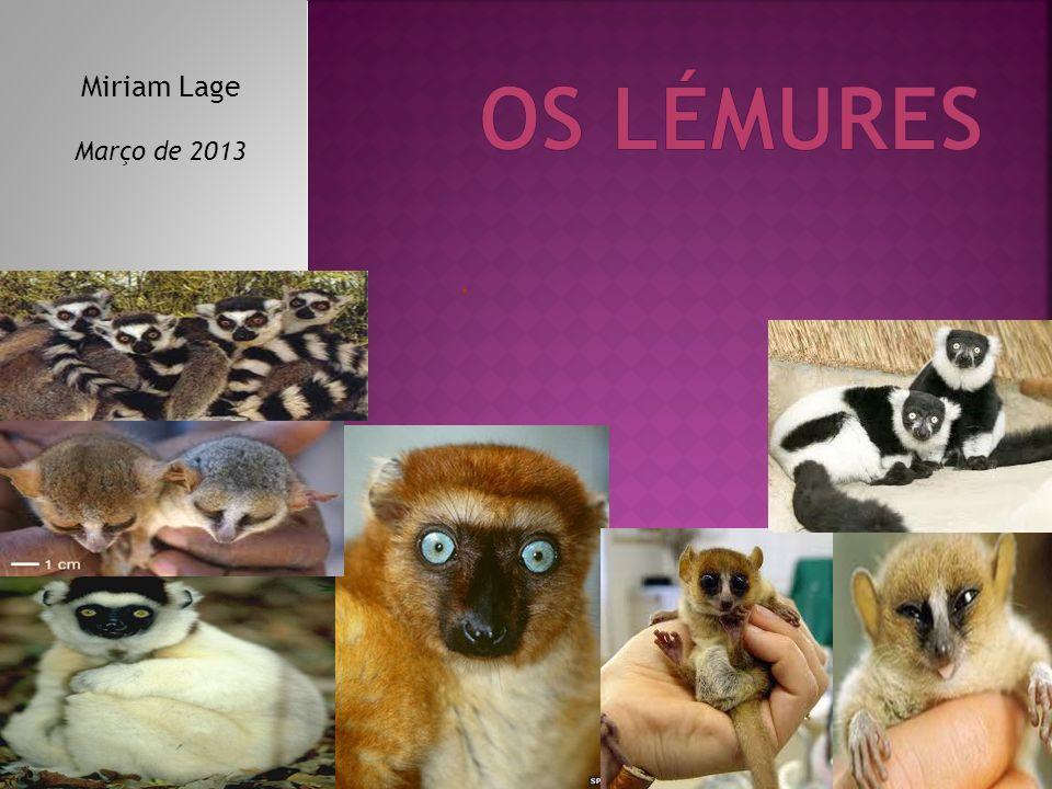 Os lémures Miriam Lage Março de 2013 .