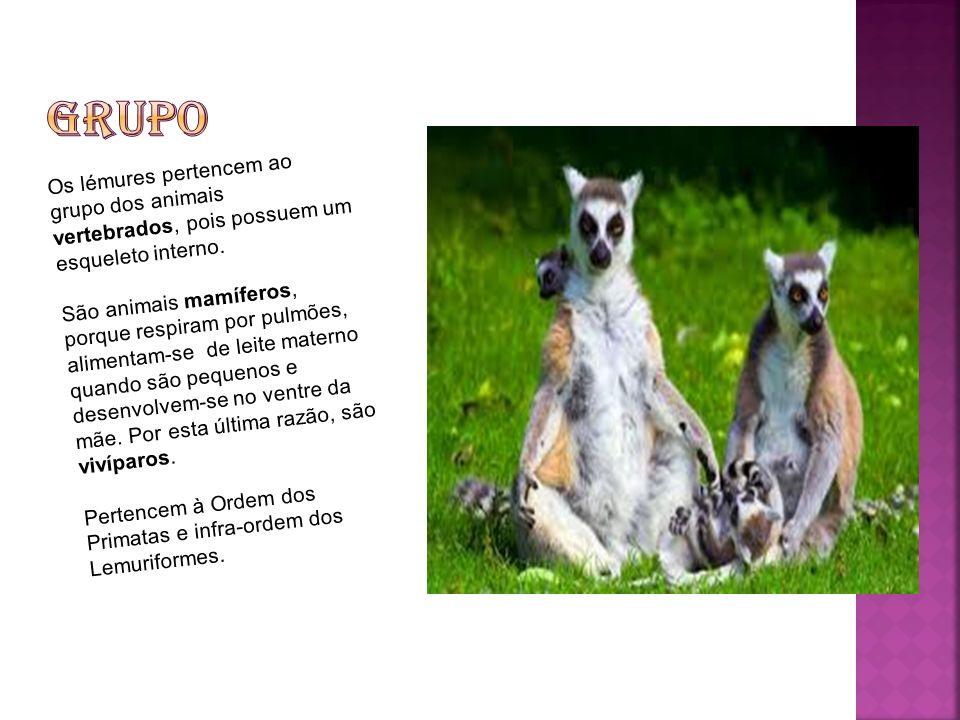 Grupo Os lémures pertencem ao grupo dos animais vertebrados, pois possuem um esqueleto interno.