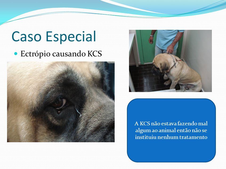 Caso Especial Ectrópio causando KCS