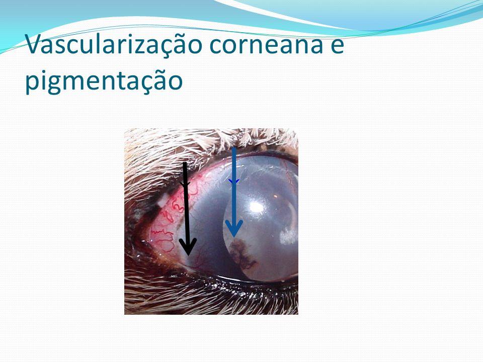Vascularização corneana e pigmentação