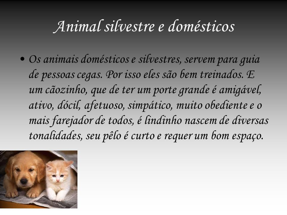 Animal silvestre e domésticos
