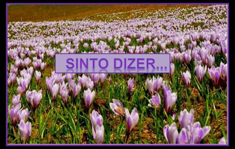 SINTO DIZER...