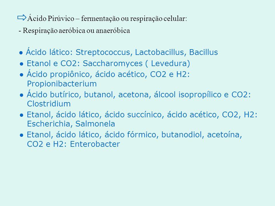 ⇨Ácido Pirúvico – fermentação ou respiração celular: