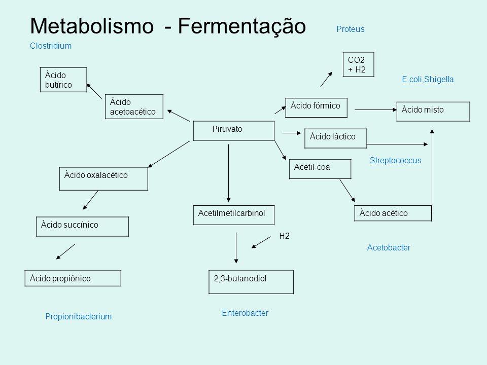 Metabolismo - Fermentação