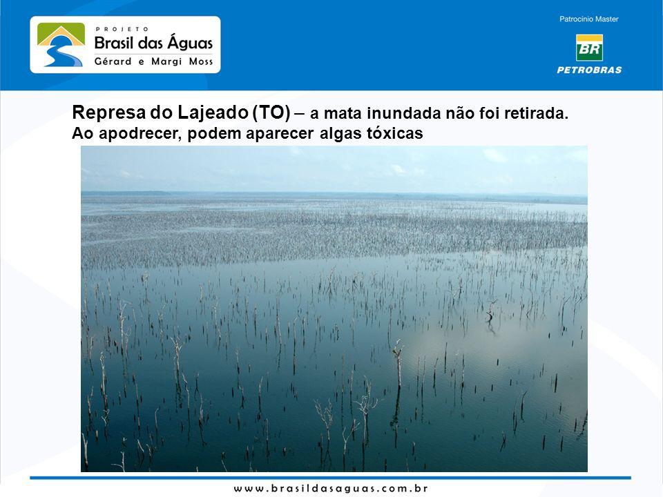 Represa do Lajeado (TO) – a mata inundada não foi retirada.