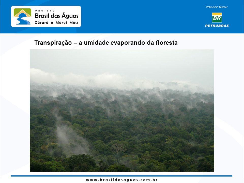 Transpiração – a umidade evaporando da floresta